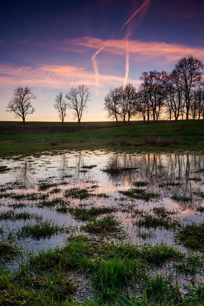 Wetlands landscape
