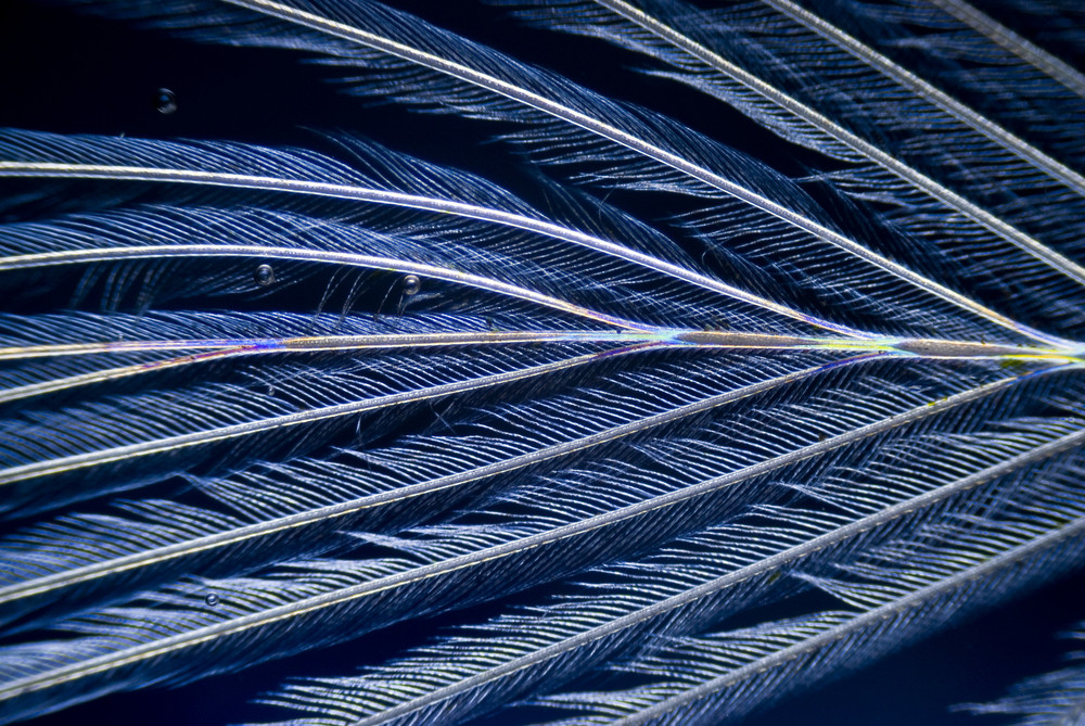 Microphoto Of A Feather