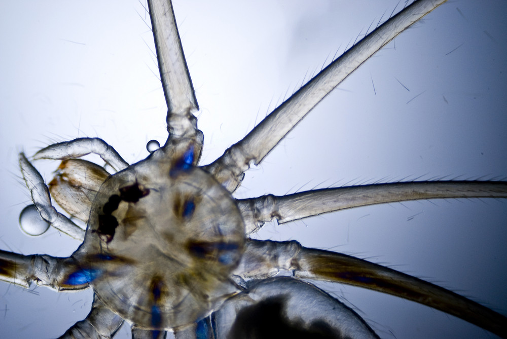 Microphoto Of A Spider