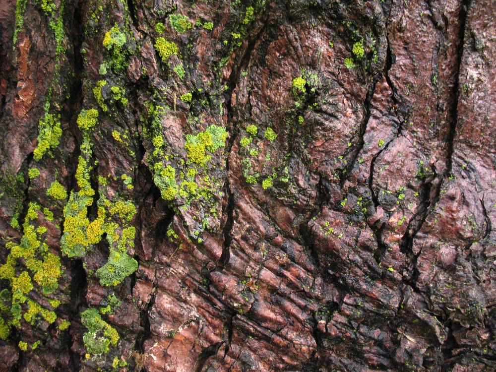 Moss 2 Texture