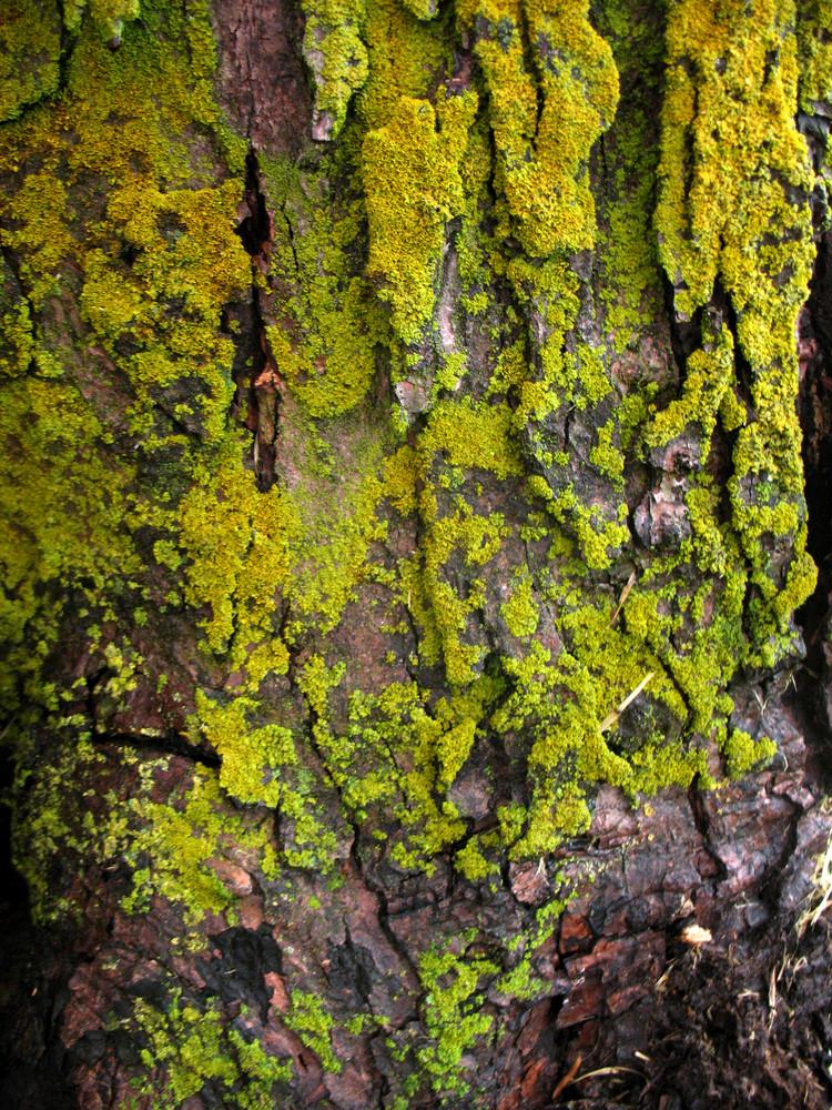Moss 3 Texture