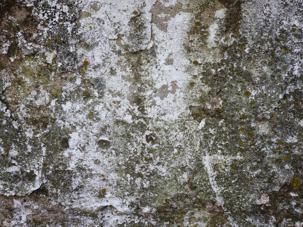 Moss 5 Texture