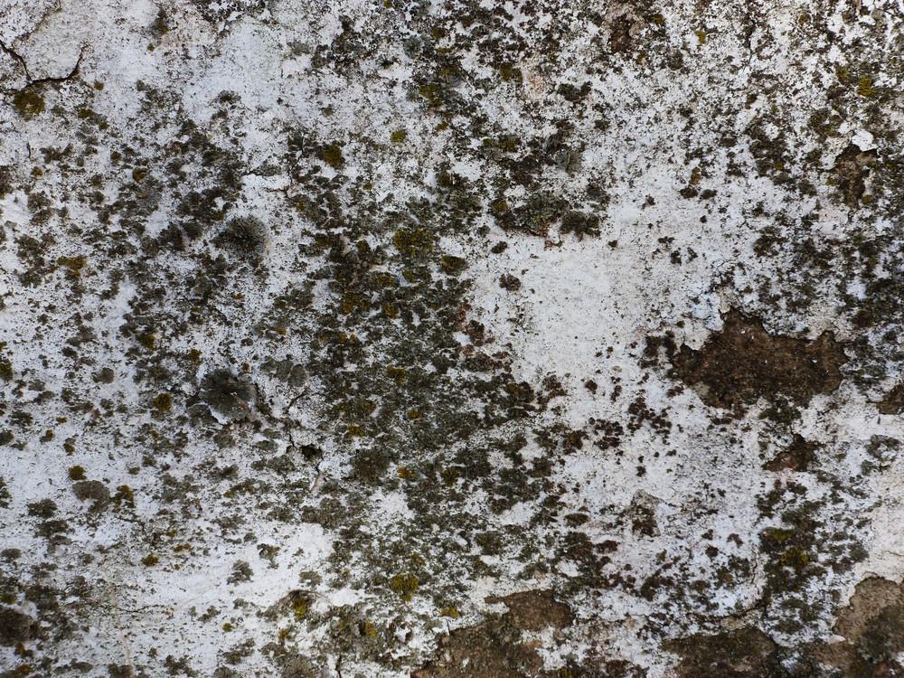 Moss 9 Texture