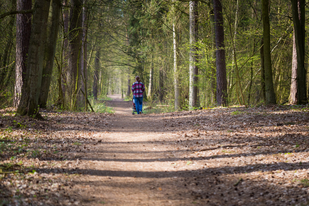 Mother with stroller walking by path in green springtime forest forest. Landscape with one person.