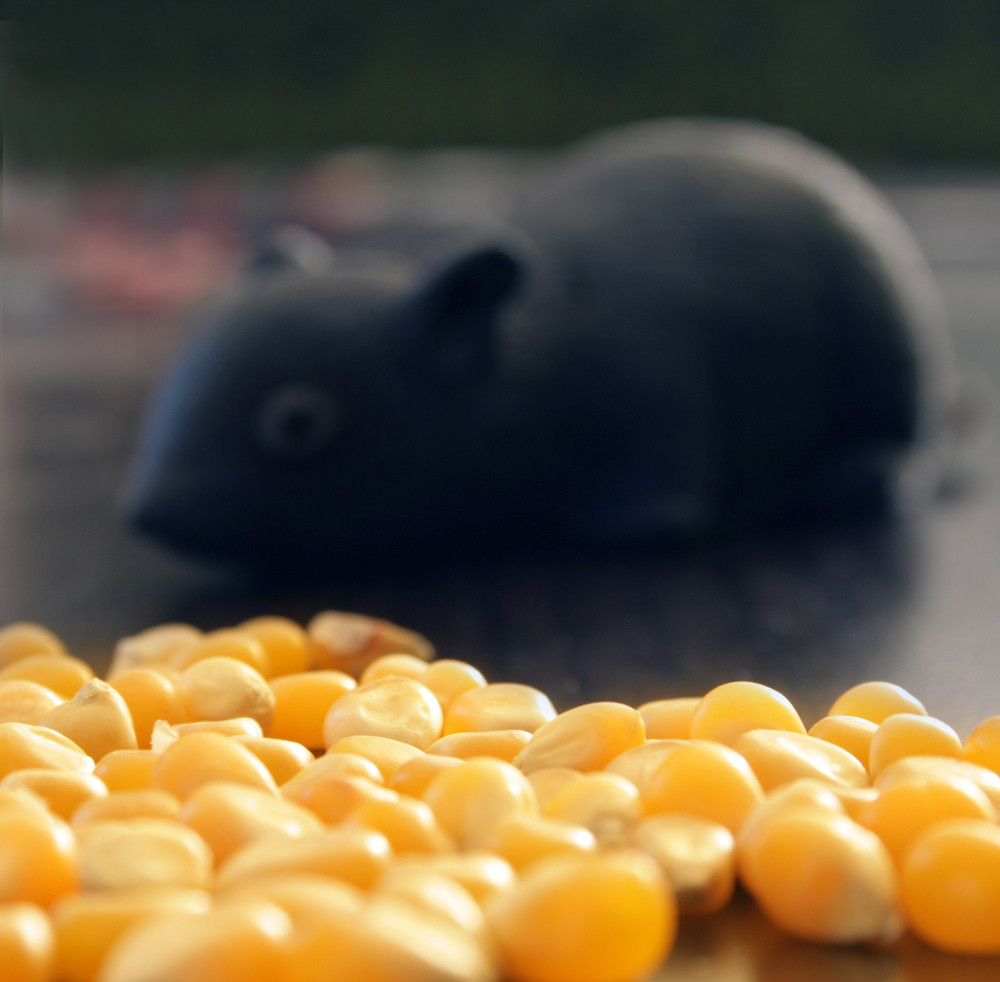 Mouse And Corn