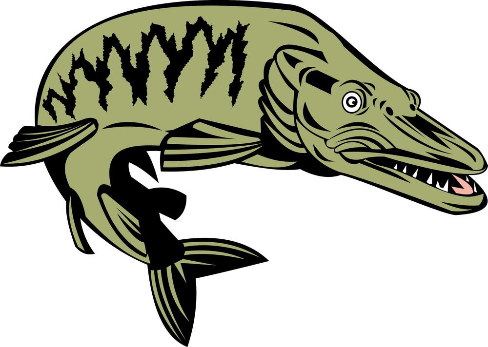 Muskie Muskellunge Fish Retro