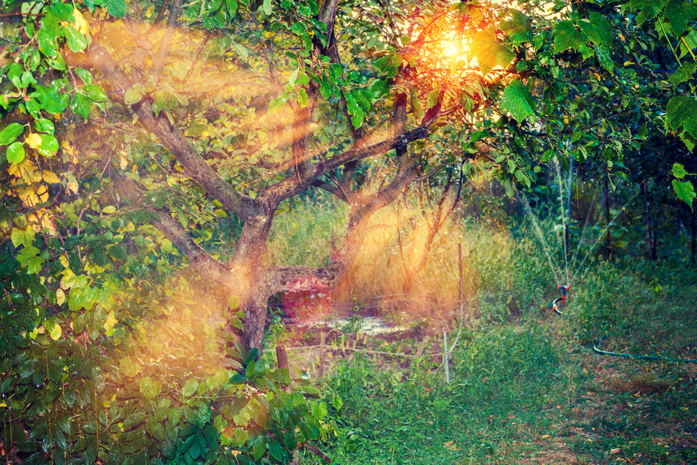 Natural sun rays in the garden at sunset