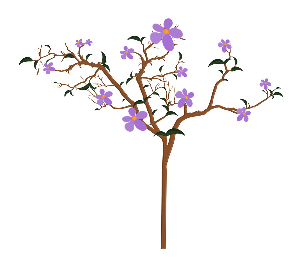 Nature Flowers Branches