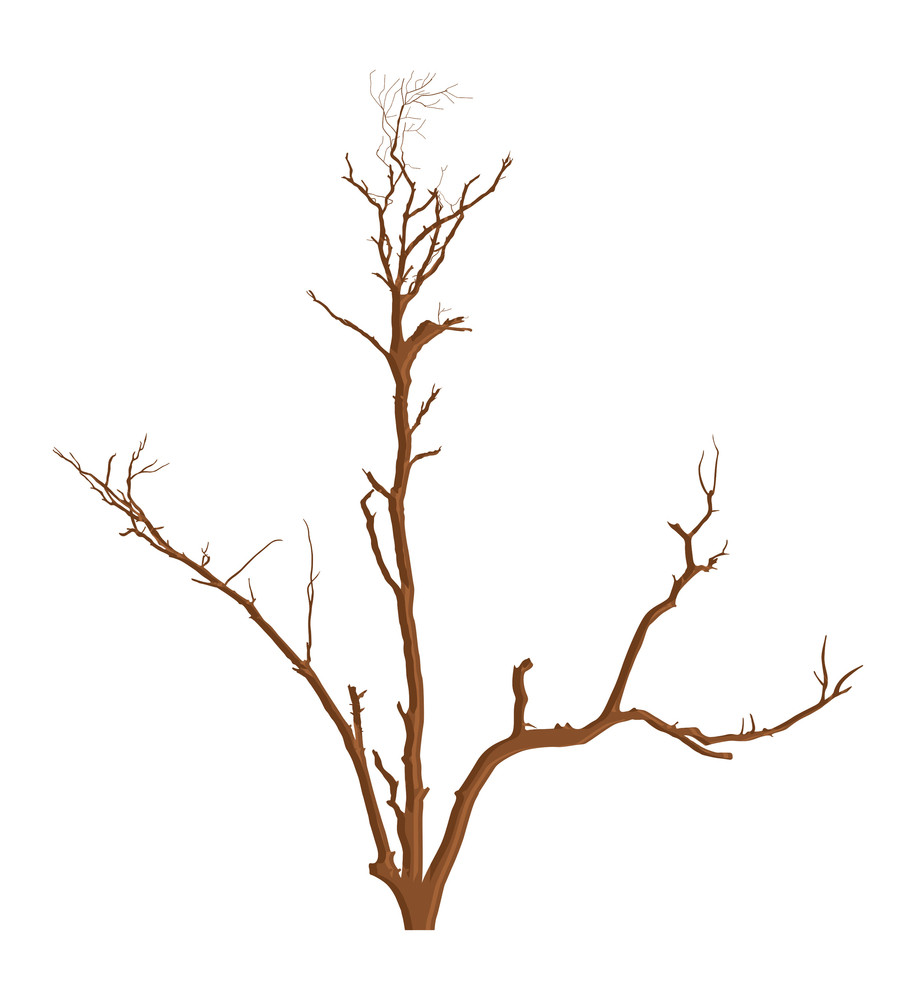 Nature Garden Dead Tree Vector