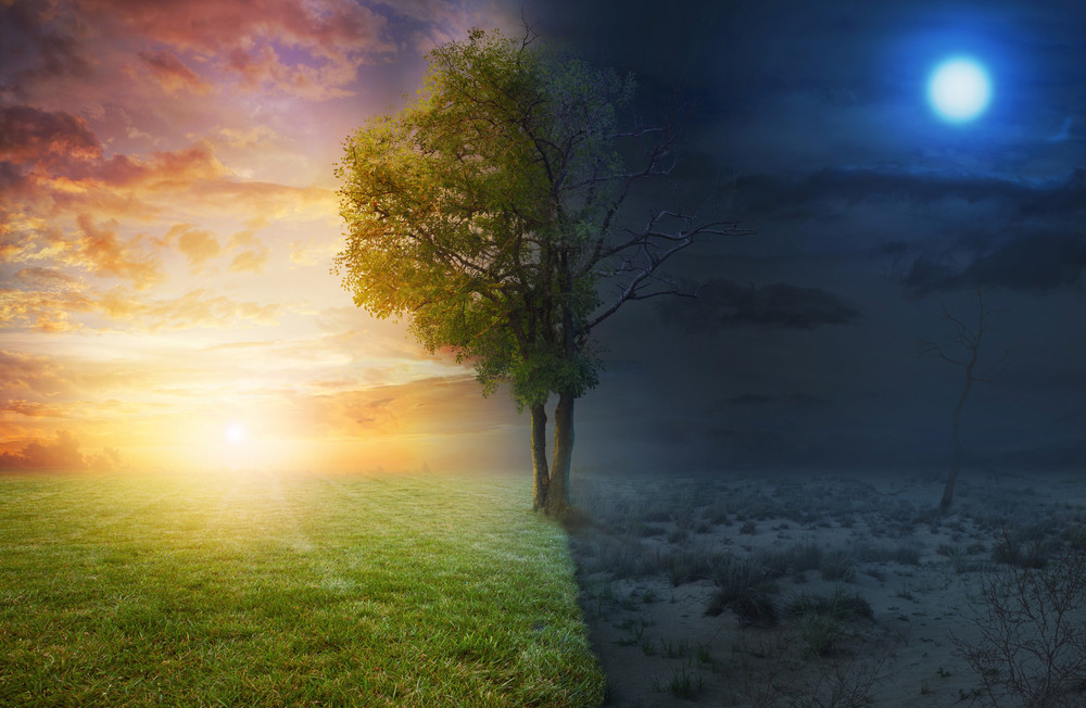 Night and day landscape with a single tree