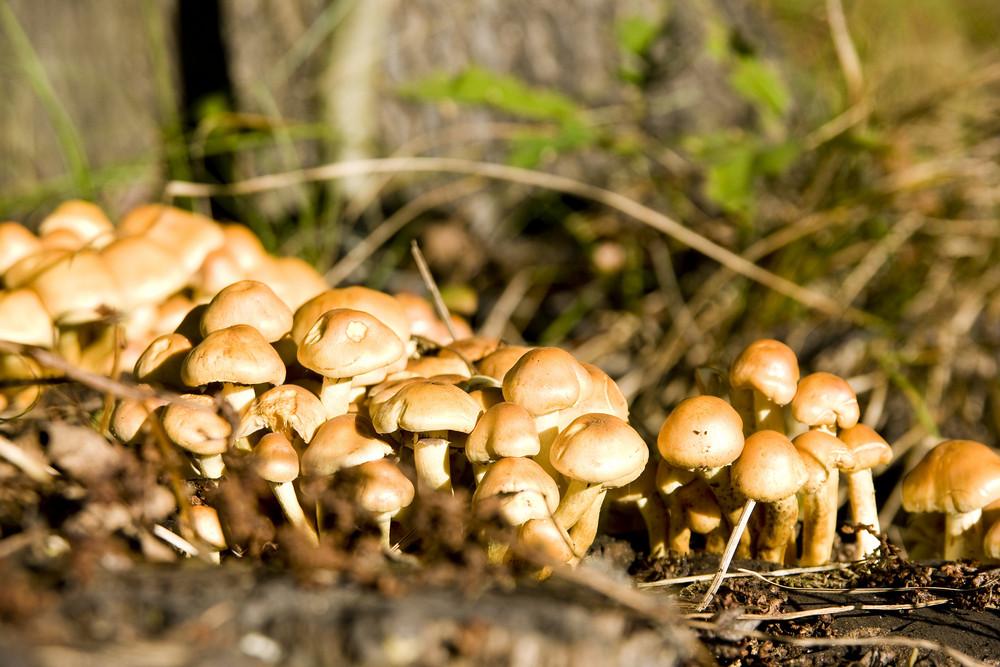 Non Edible Mushrooms
