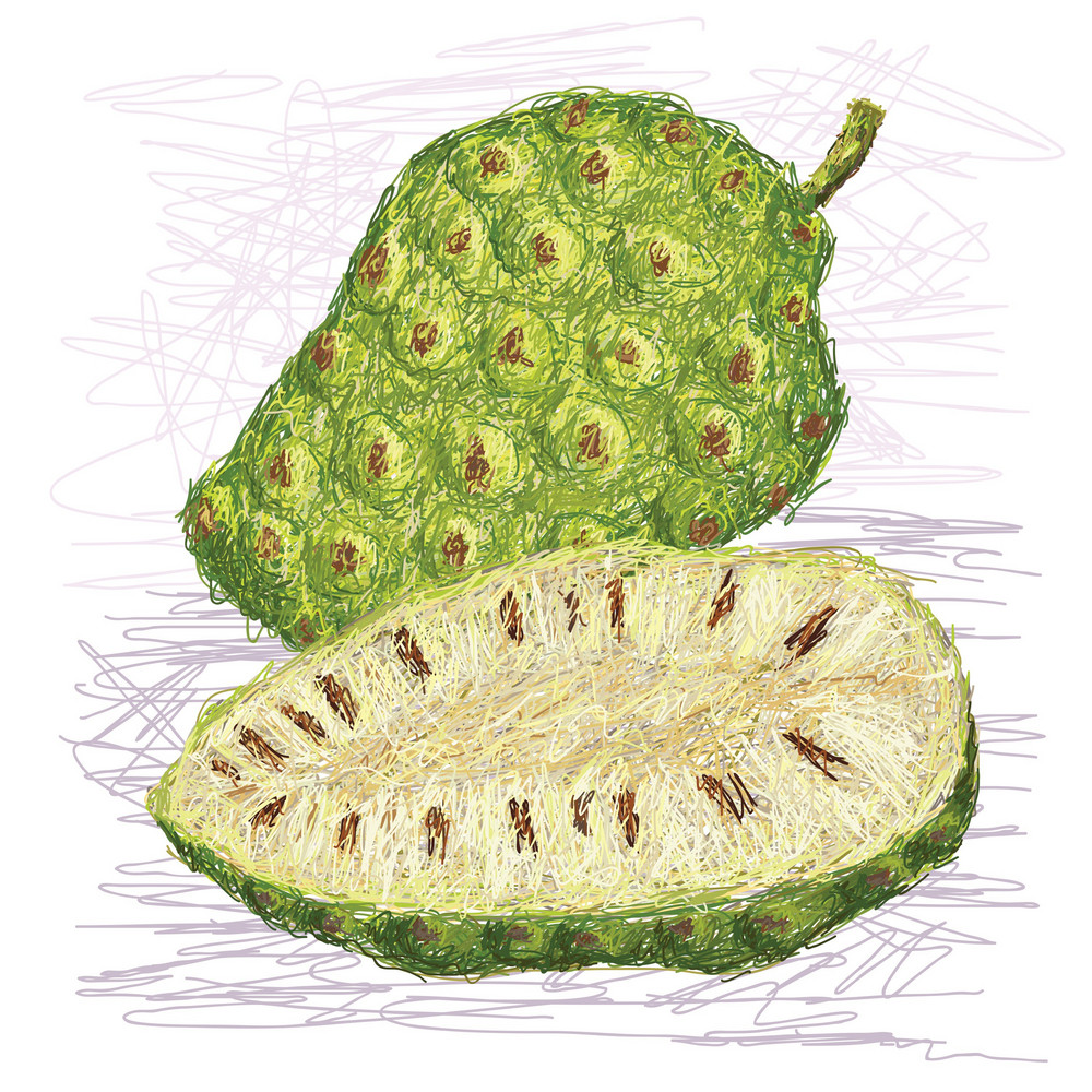 Noni Fruit Cross Section