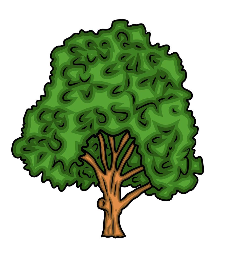 Oak Green Tree