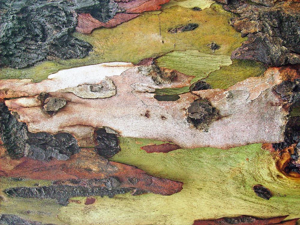 Oak_tree_skin
