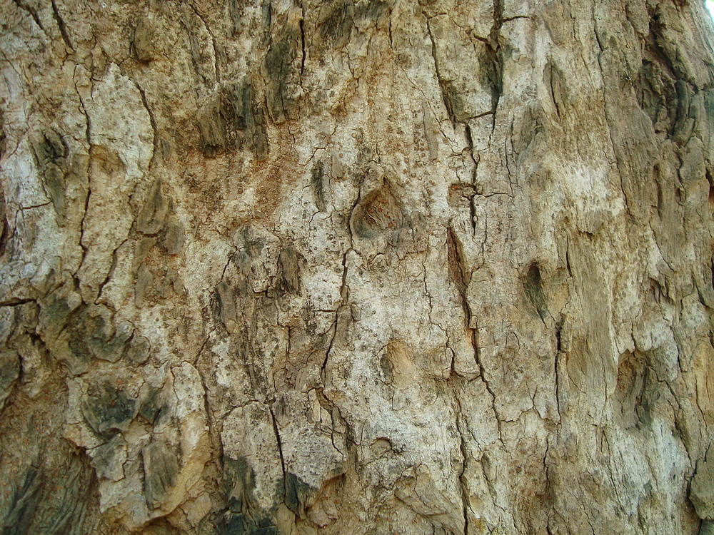 Oak_tree_surface