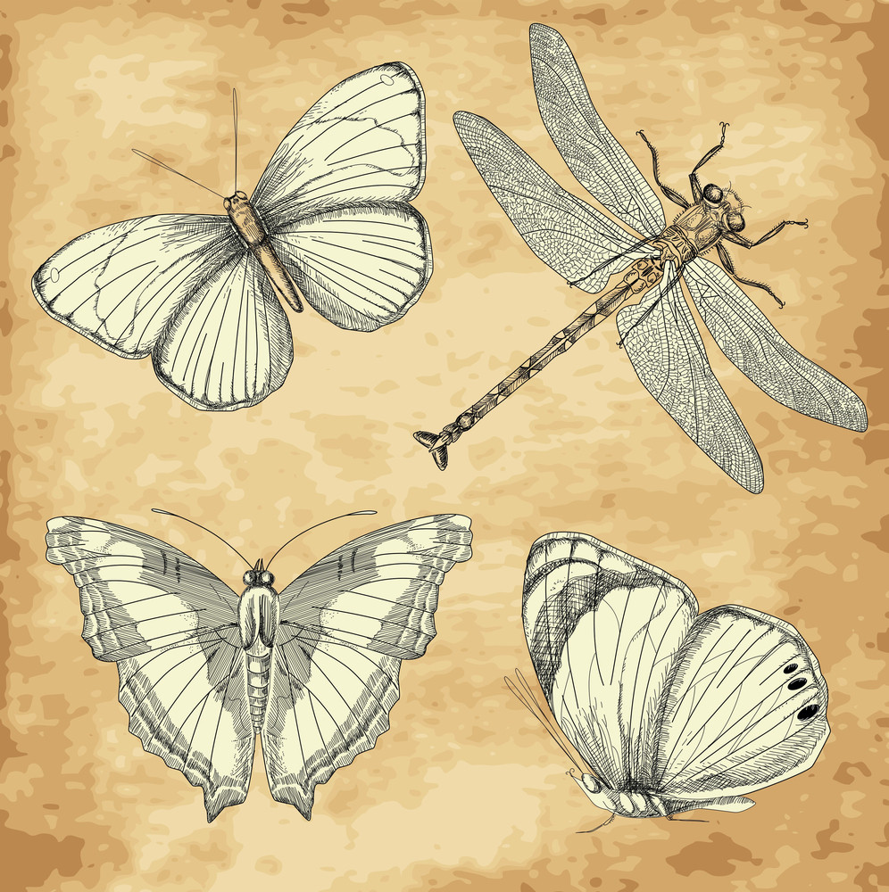 Old Butterfly Collection