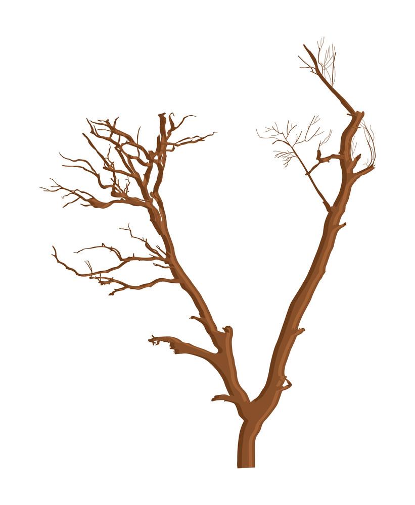 Old Vintage Tree