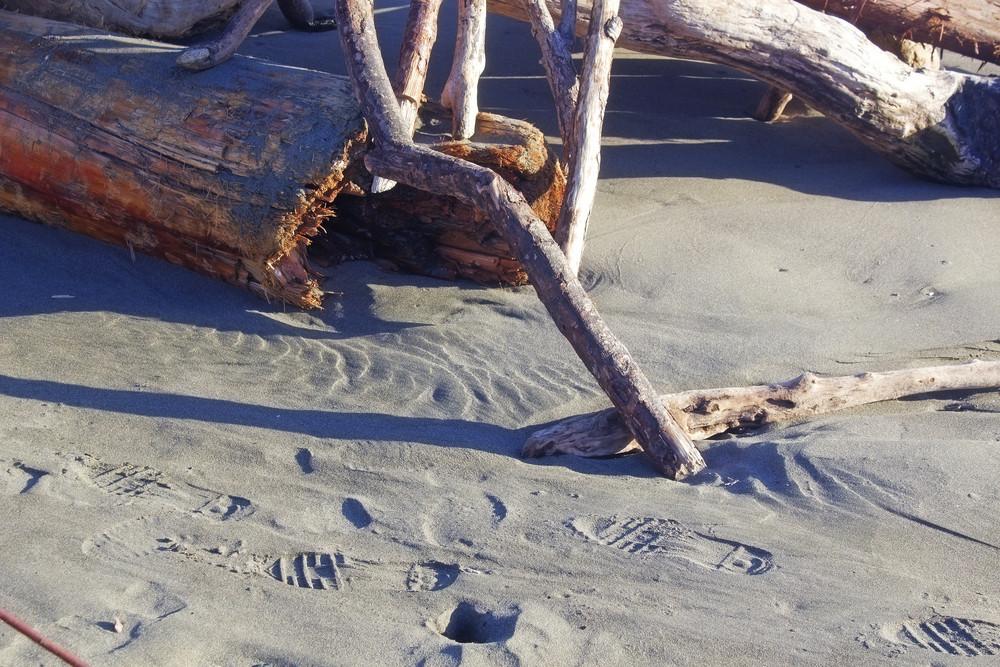 Old Wood At Beach