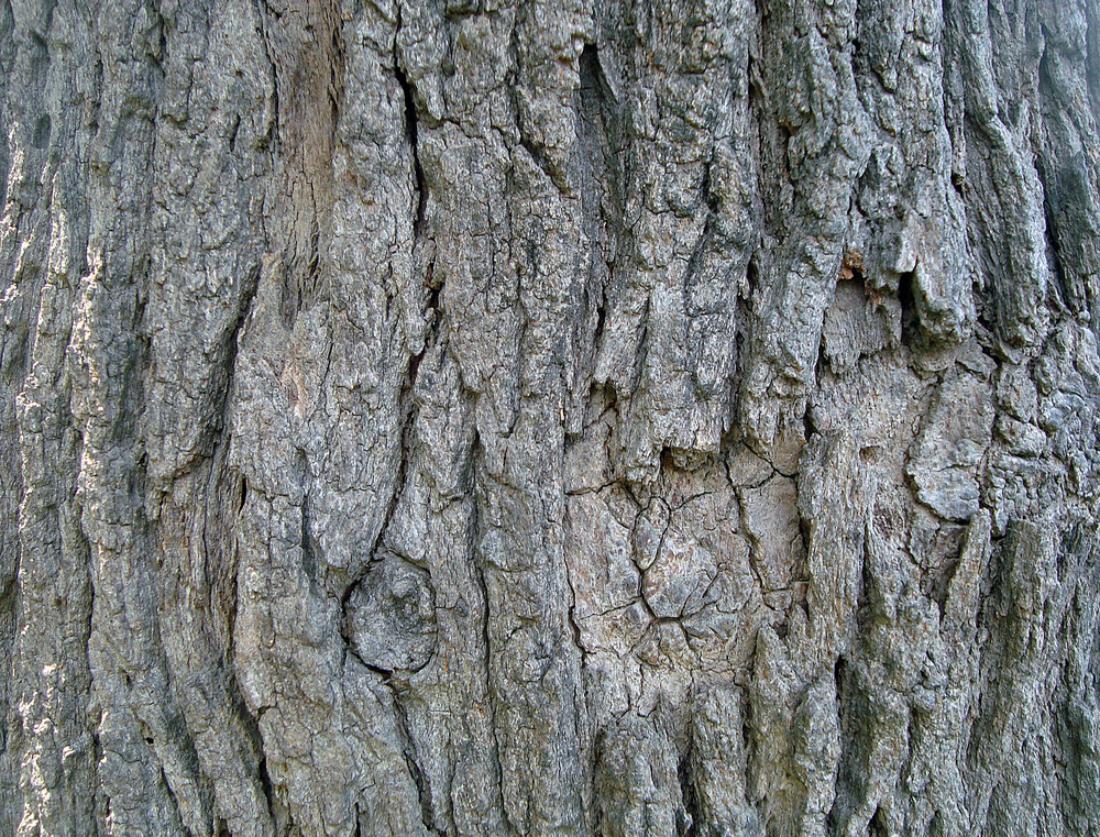 Old_tree_bark