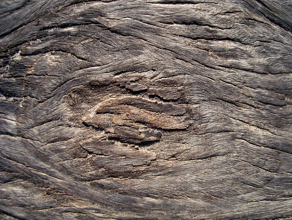 Old_wood