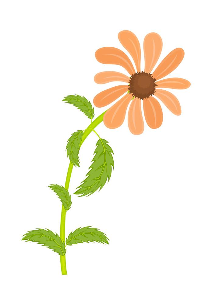 Orange Daisy Vector Element