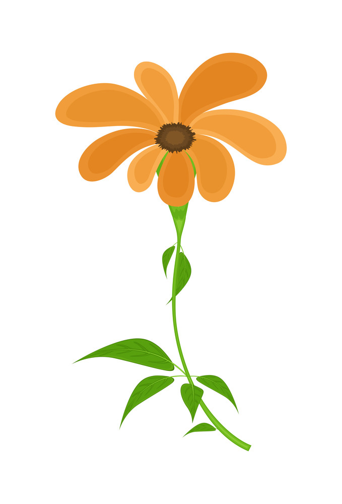 Orange Daisy Vector