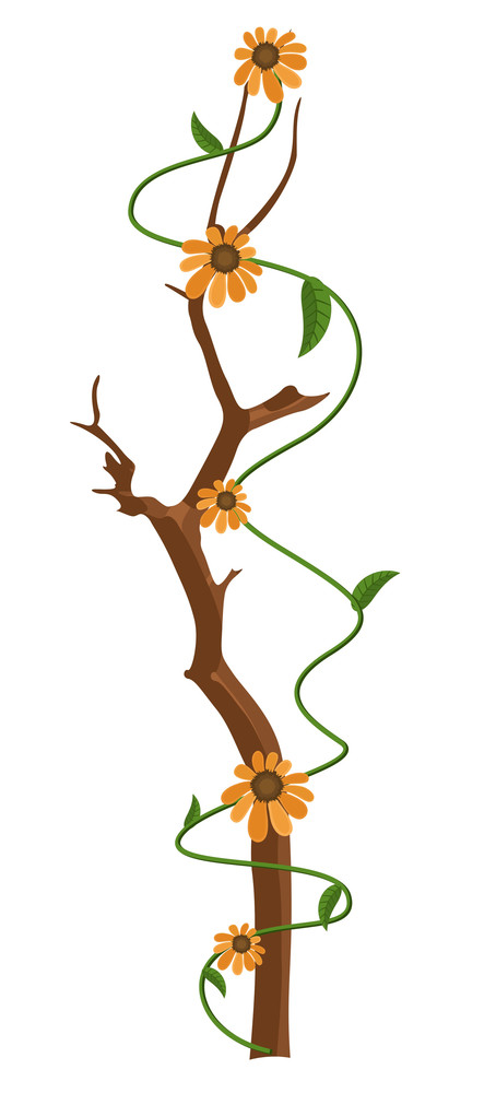 Orange Flowers Branch Vector