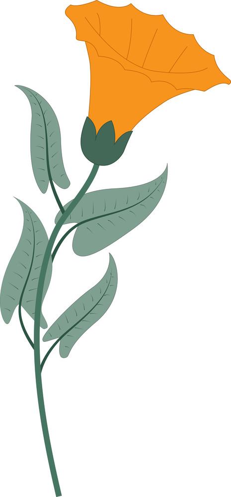 Orange Lily Flower Vector