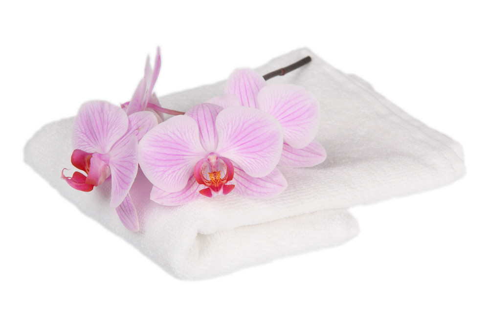 Orchid With A White Towel