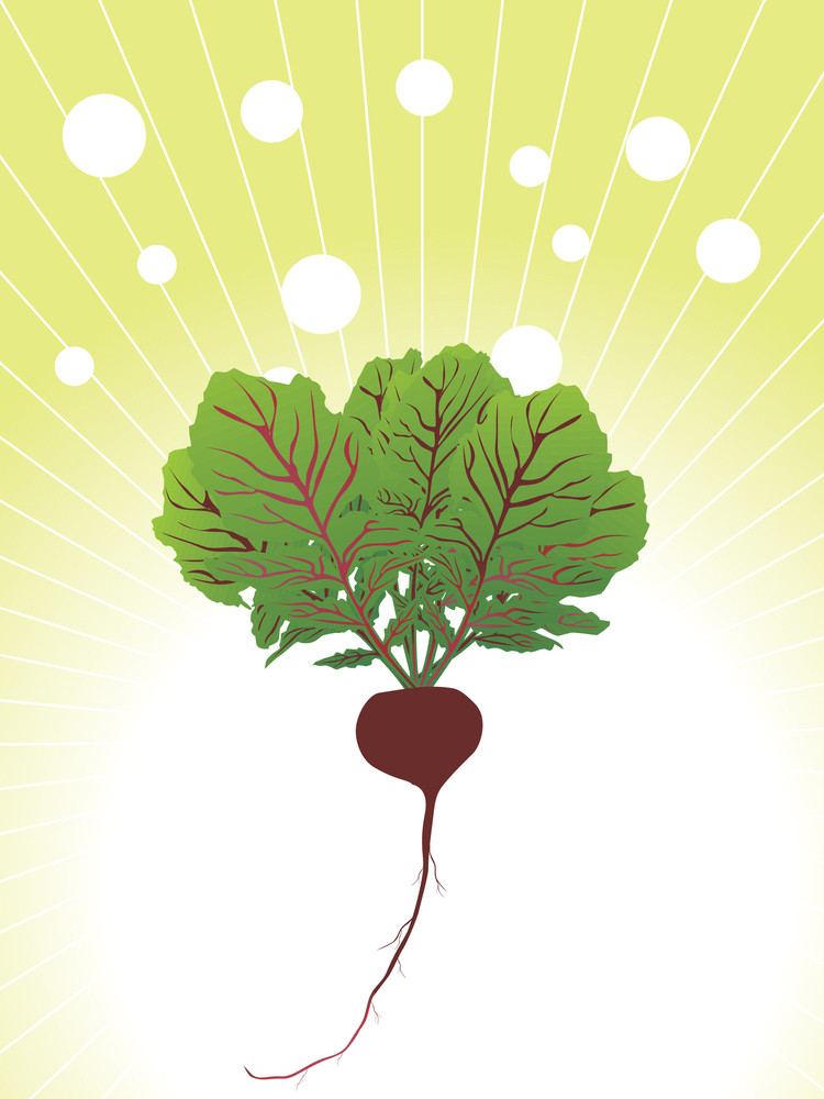 Organic Beetroot Close Up Illustration