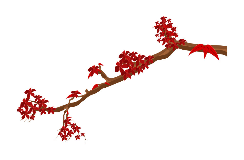 Organic Flowers Branch Vector