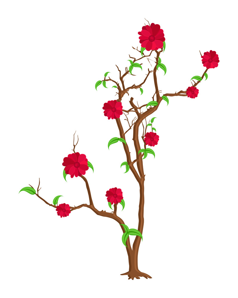 Organic Flowers Plant