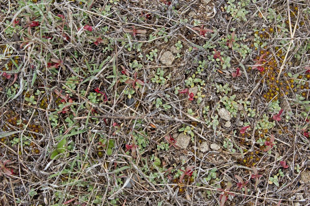 Organic Ground