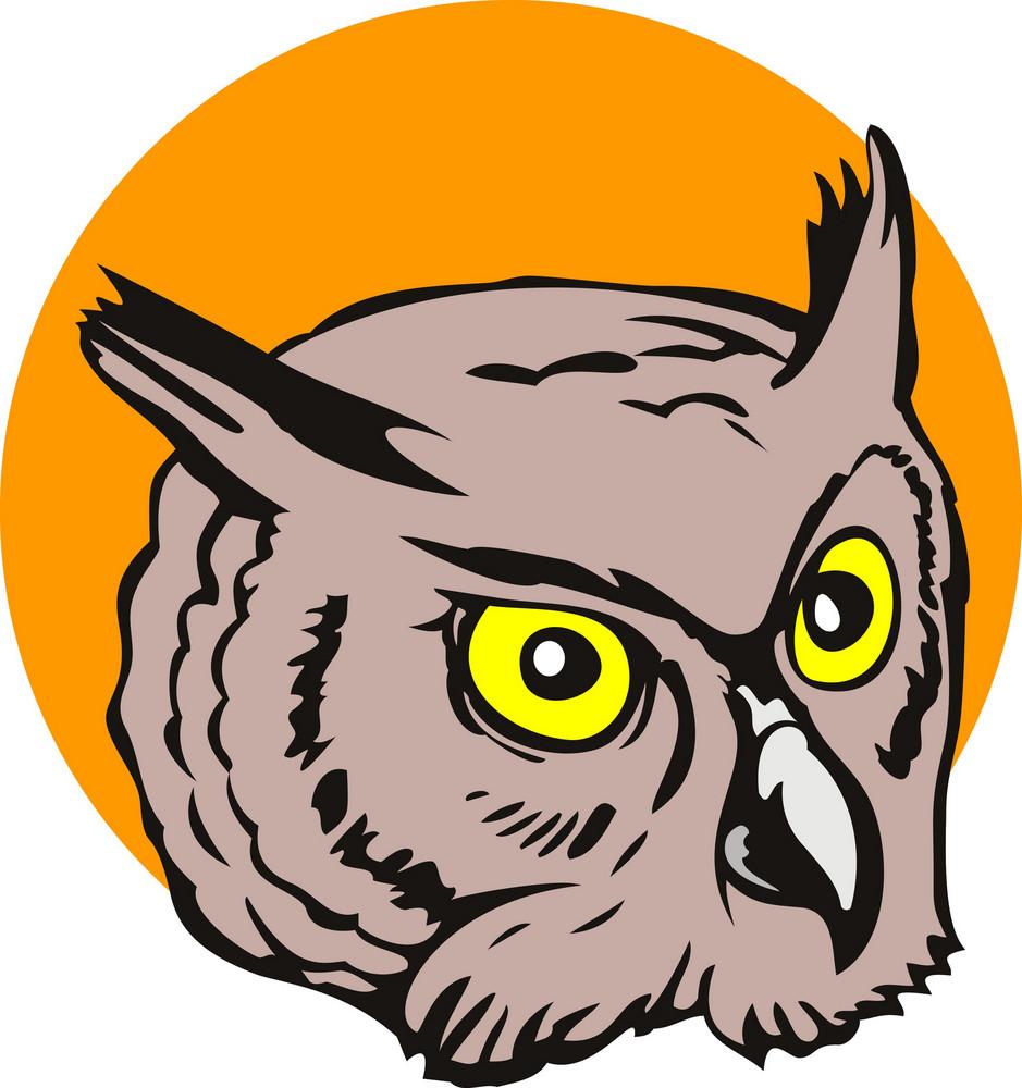 Owl Head