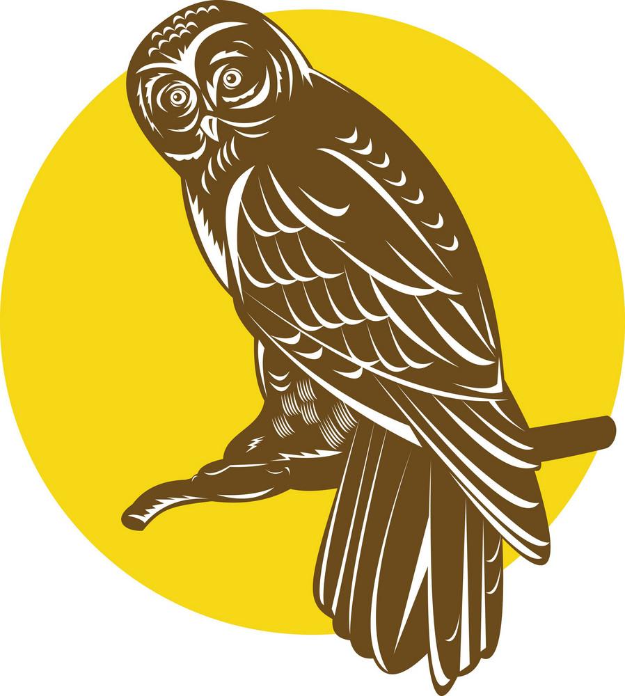 Owl On Branch Retro
