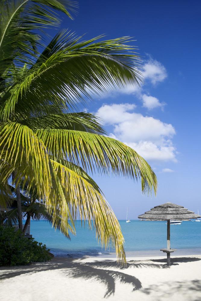 Palm tree and a beach umbrella at a tropical beach resort