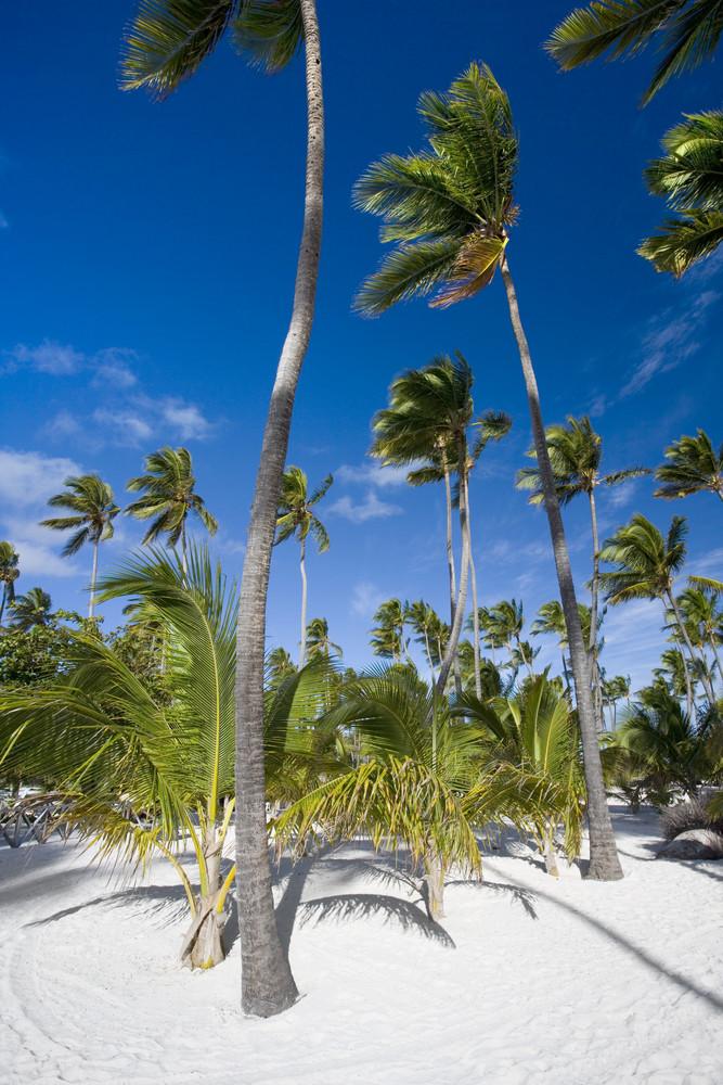 Palm trees on a sandy, tropical beach