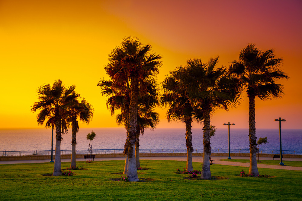 Palm trees on the embankment at sunset