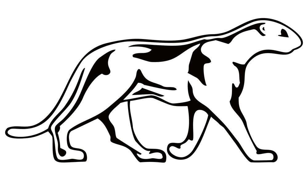 Panther Walking