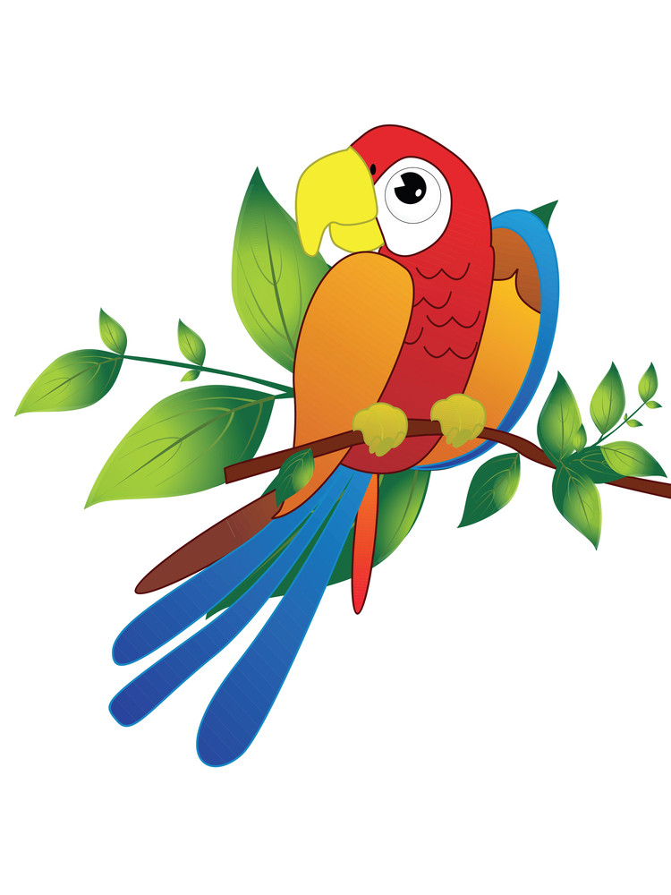 Parrot On Branch Illustration