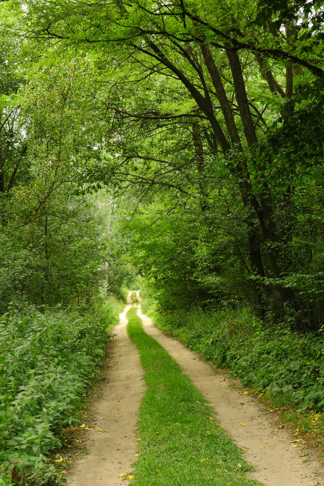 Path In The Green Forest Royalty Free Stock Image Storyblocks Images