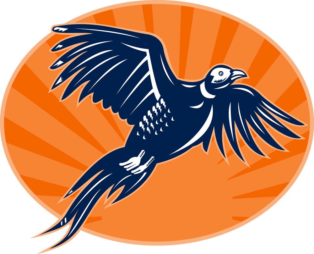 Pheasant Bird Flying Up With Sunburst