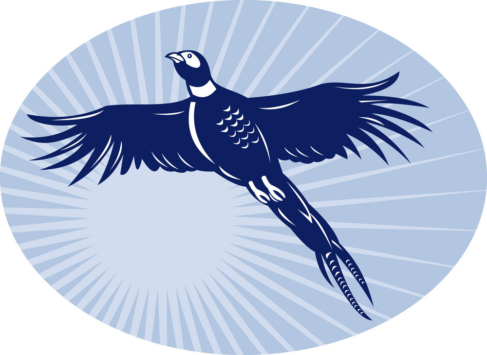 Pheasant Bird Flying Up