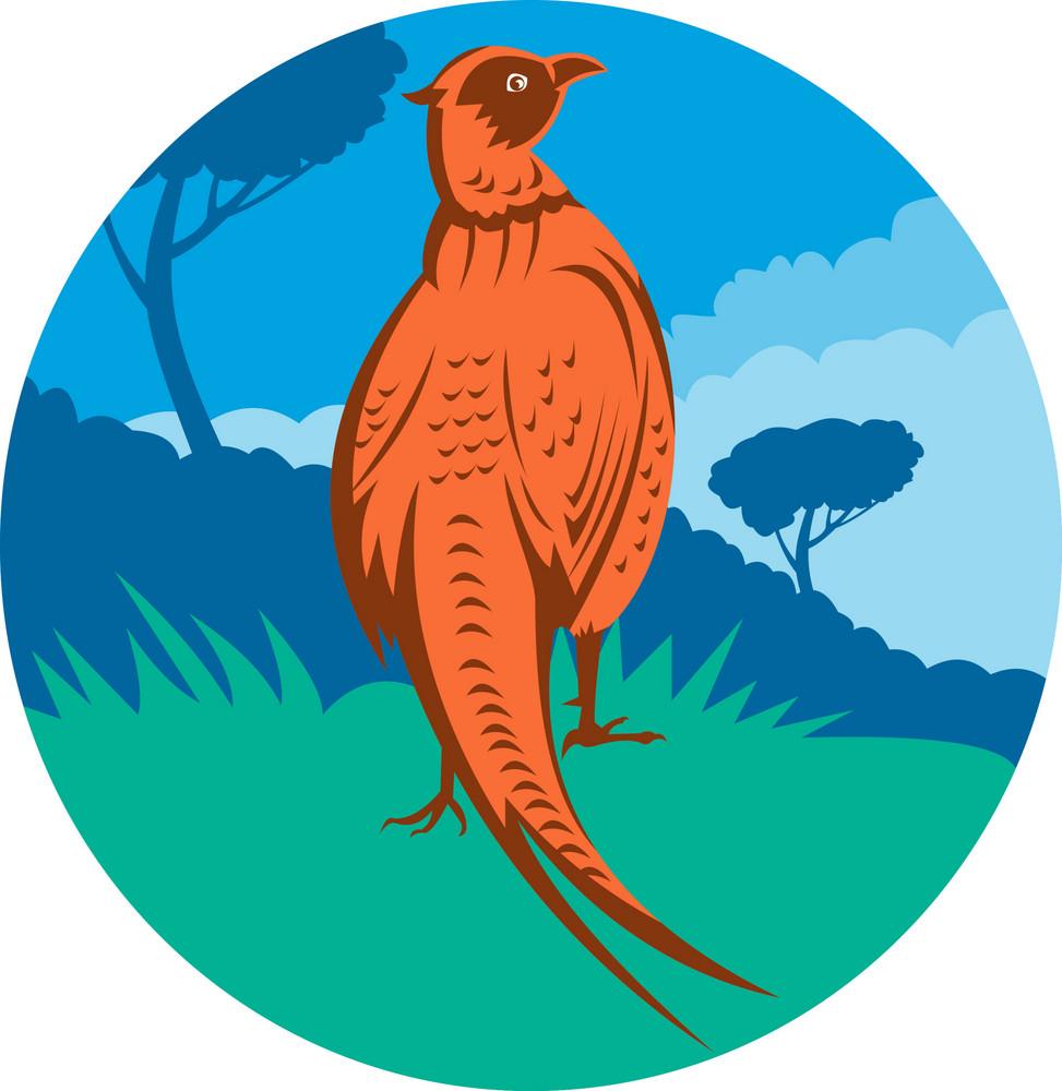 Pheasant Bird Walking With Tree
