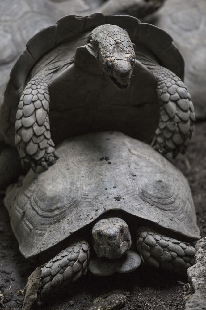 Picture of turtles at asian zoo