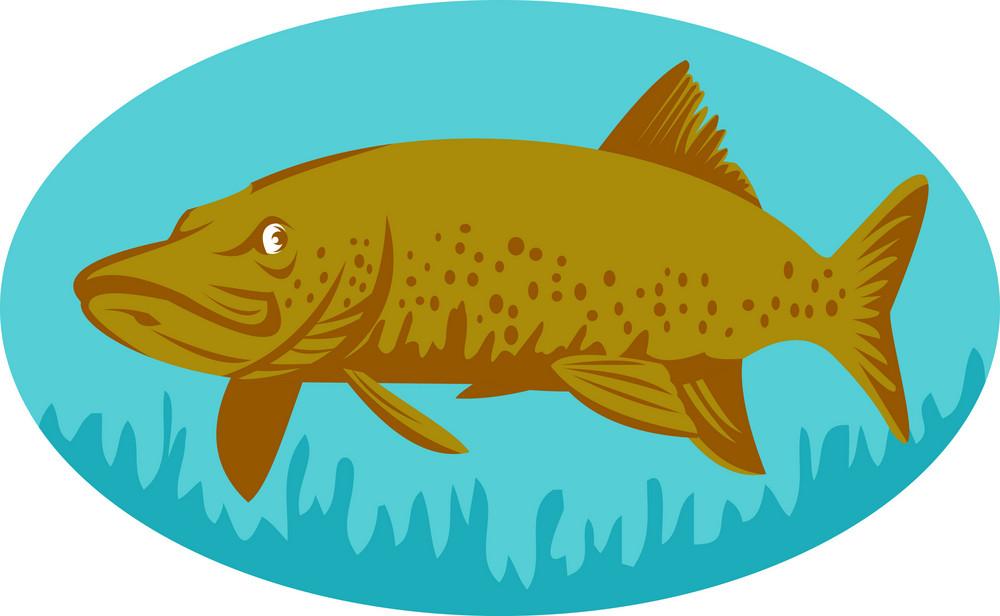 Pike Or Muskie Fish Swimming