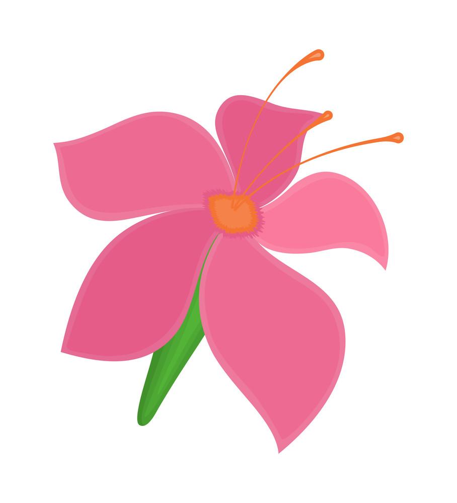 Pink Blossom Illustration