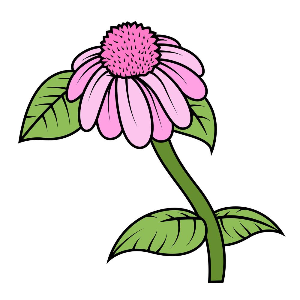 Pink Blossom Vector Branch