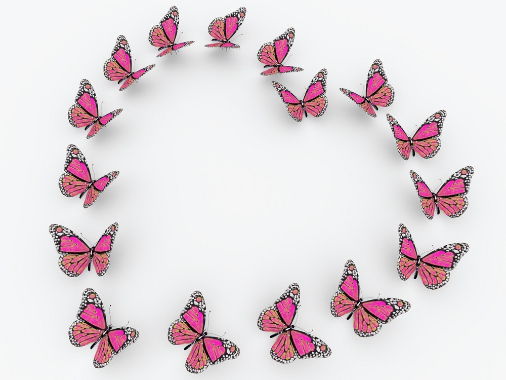 Pink Butterflies Isolated On White Background