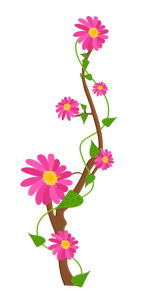 Pink Daisies Branch